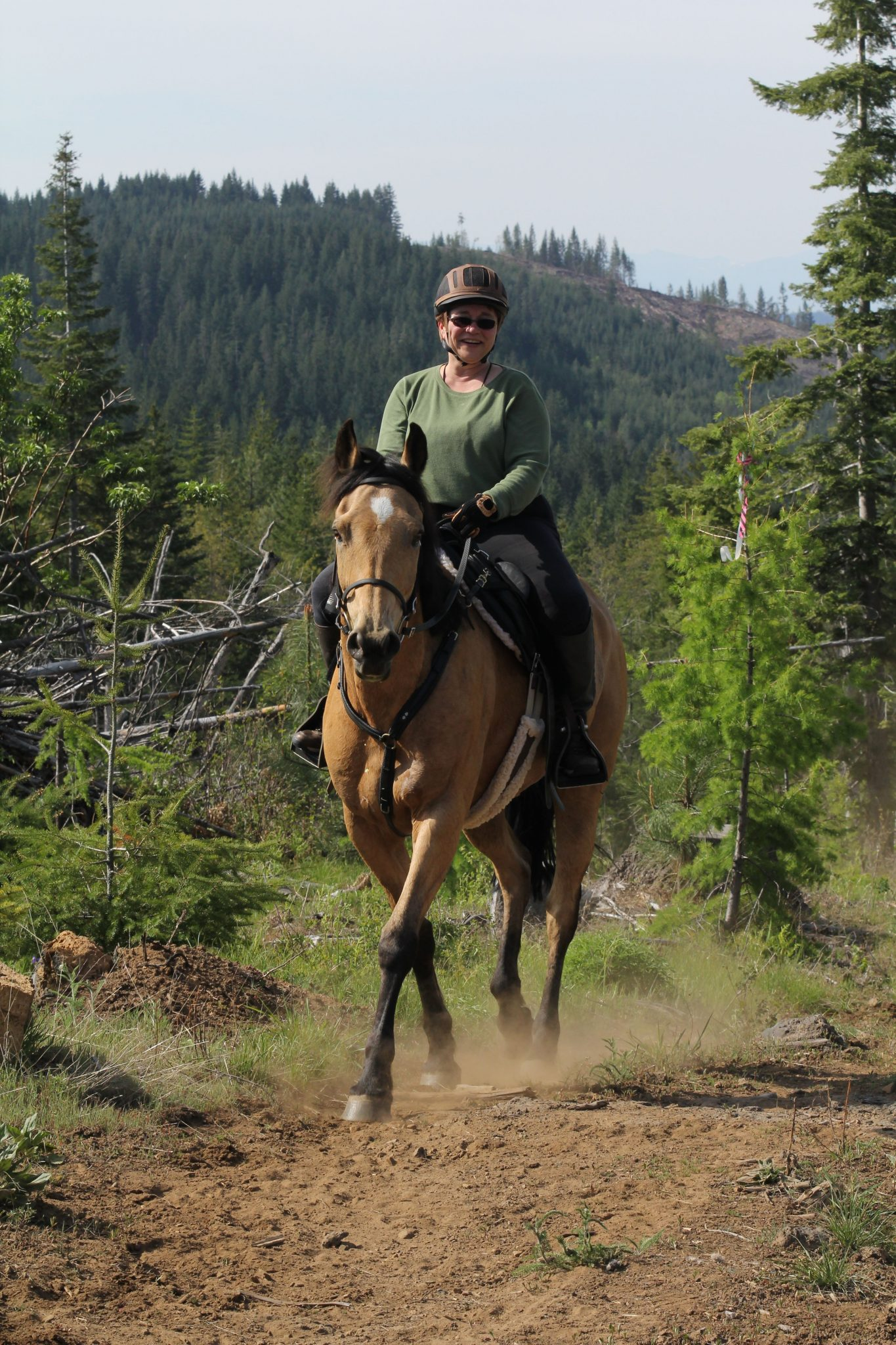 Spring Inspiration: Leadership Lessons from My Horses