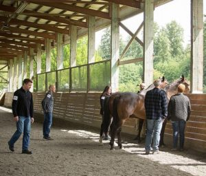Equine Assisted Team Building Activities