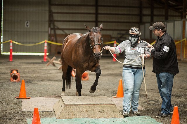 Roam Consulting Equine Assisted Leadership Workshops