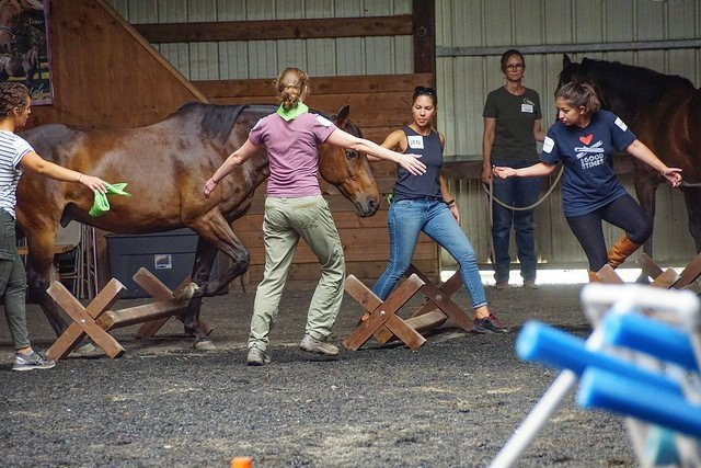 Equine Assisted Team Building Activites