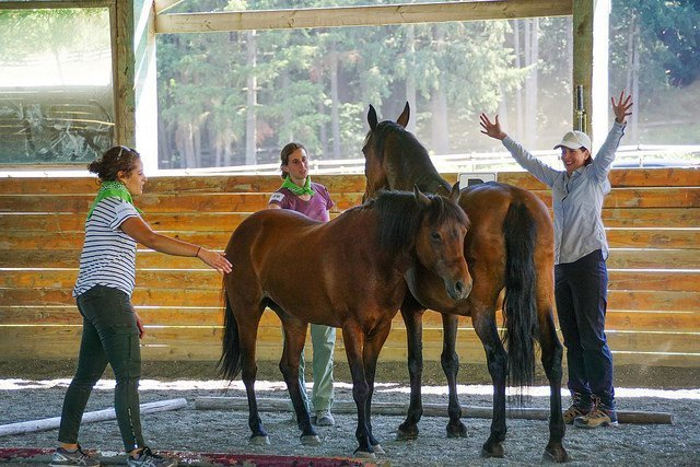 Roam Consulting Equine Assisted Leadership Training