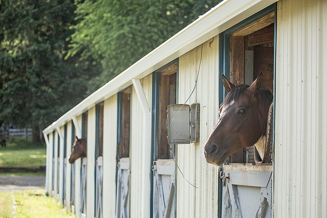 Equine Assisted Leadership Training