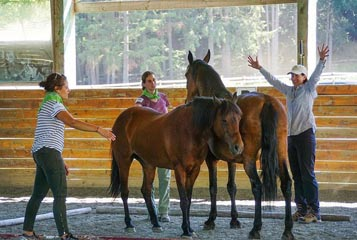 Partnership with SAFE:  Equine Assisted Leadership Training