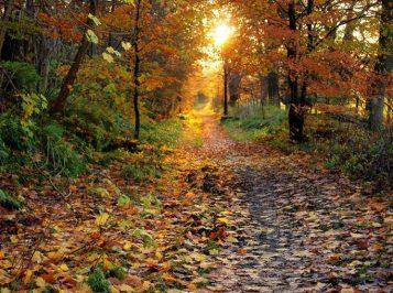 self reflecting in fall